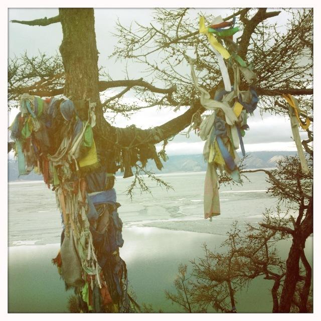 un arbre a souhaits