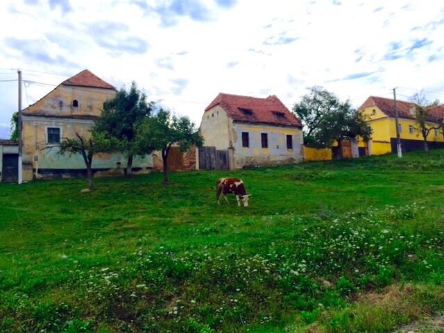 Viscri bijou de Transylvanie